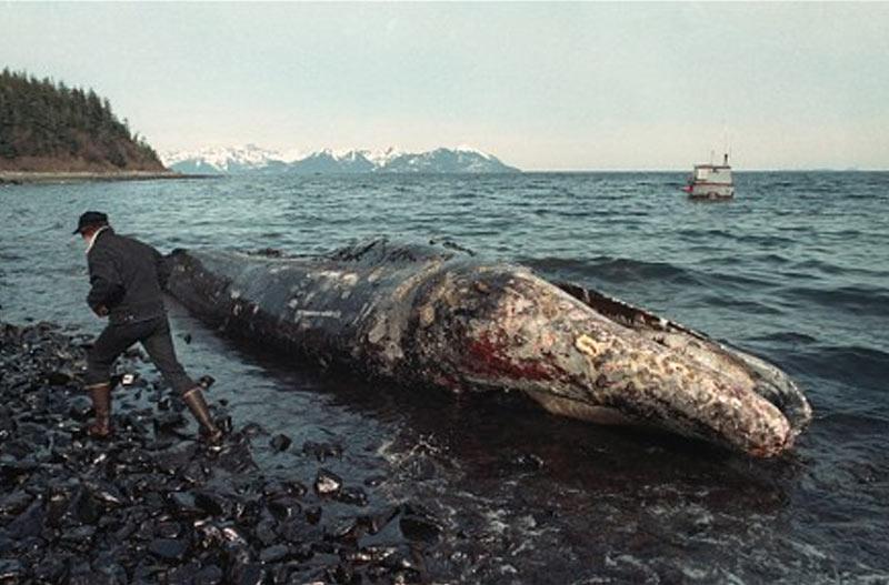 Exxon-Valdez-oil-spill .jpg