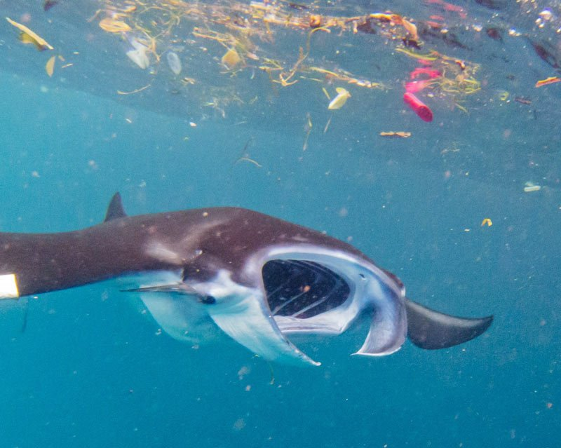 Marine life suffering due to micro plastic in oceans