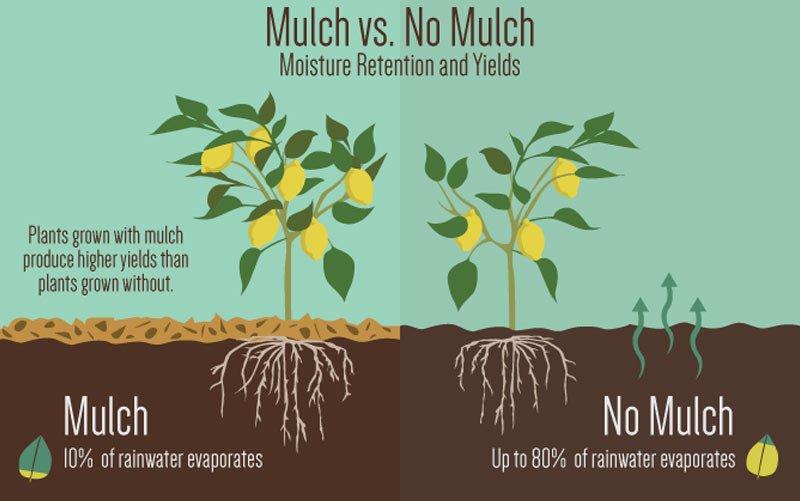 Mulch gardens benefit