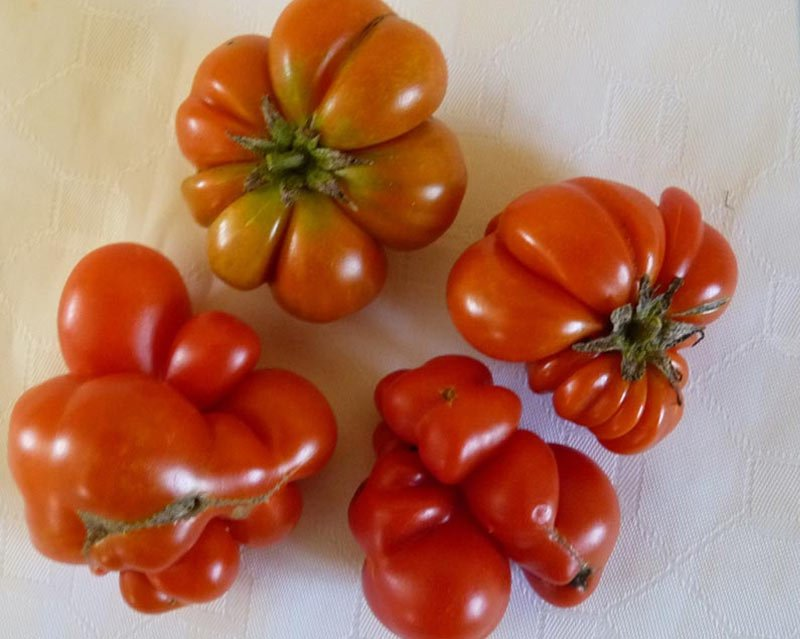 mutation in vegetable after radioactive pollution in water